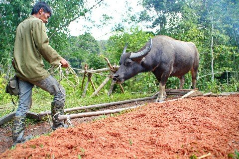 Only a small percentage of Malaysian people farm small holdings